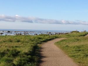 Jogging längs havet, skillinge, Österlen